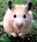 szczur's picture